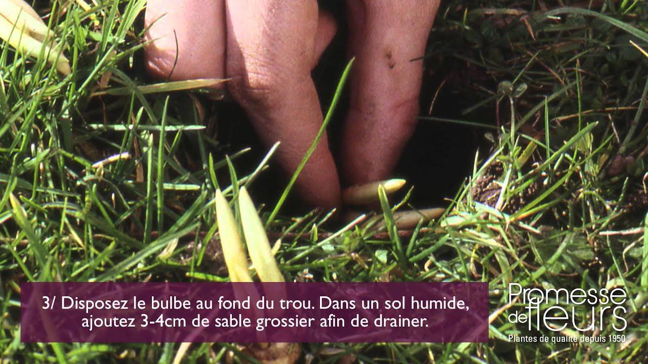 Planter des crocus avec un plantoir bulbes youtube for Planter un bulbe amaryllis