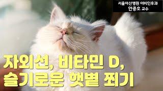 (건강) 자외선, 비타민 D, 슬기로운 햇볕 쬐기