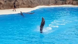 Шоу дельфинов /Tenerife