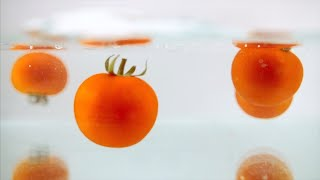 Slow motion shot of fresh tomatoes thrown into water