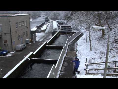 Pitlochry Fish Ladder    Licence: CC-BY-NC