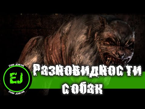 Top Binary option cash back Przemyśl