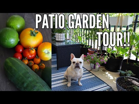 garden-tour-2018-|-small-space-patio-garden-tour---growing-in-containers!!