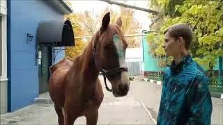 Саратовцы приносят хлеб, яблоки и сахар для полицейских лошадей
