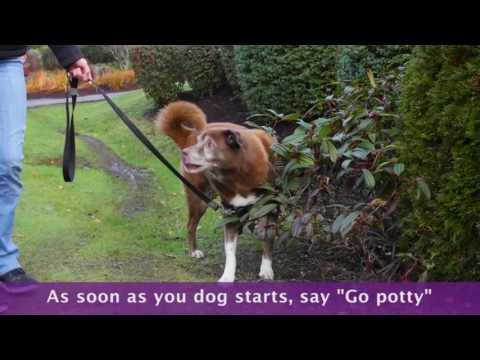 How to Teach Your Dog to Go Potty on Command