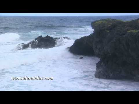 Stock Video - Stock Footage - Video Backgrounds - Tropical 0106