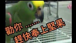 美食當前誰會跑第一 parrot