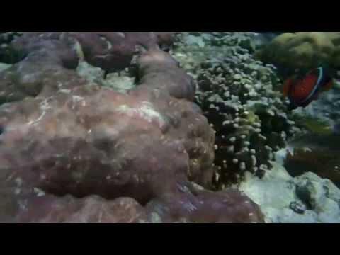 Sumilon Philippines Snorkeling Adventure