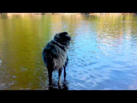 Puyallup River Park 10.15.17