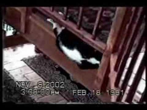 gatti-scatenati