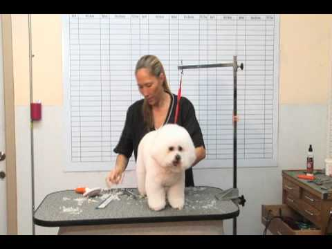 How to groom a Bichon Frise: Part 2 | The Dog House Pet Salon