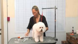 How To Groom A Bichon Frise - Part 2