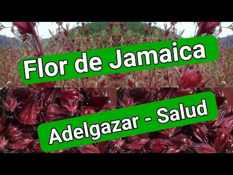 es verdad que la flor de jamaica sirve para adelgazar