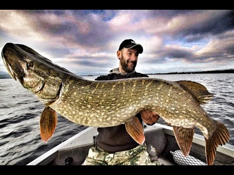 MONSTER PIKE FISHING IN IRELAND - Episode 1 - HD by CATFISH WORLD