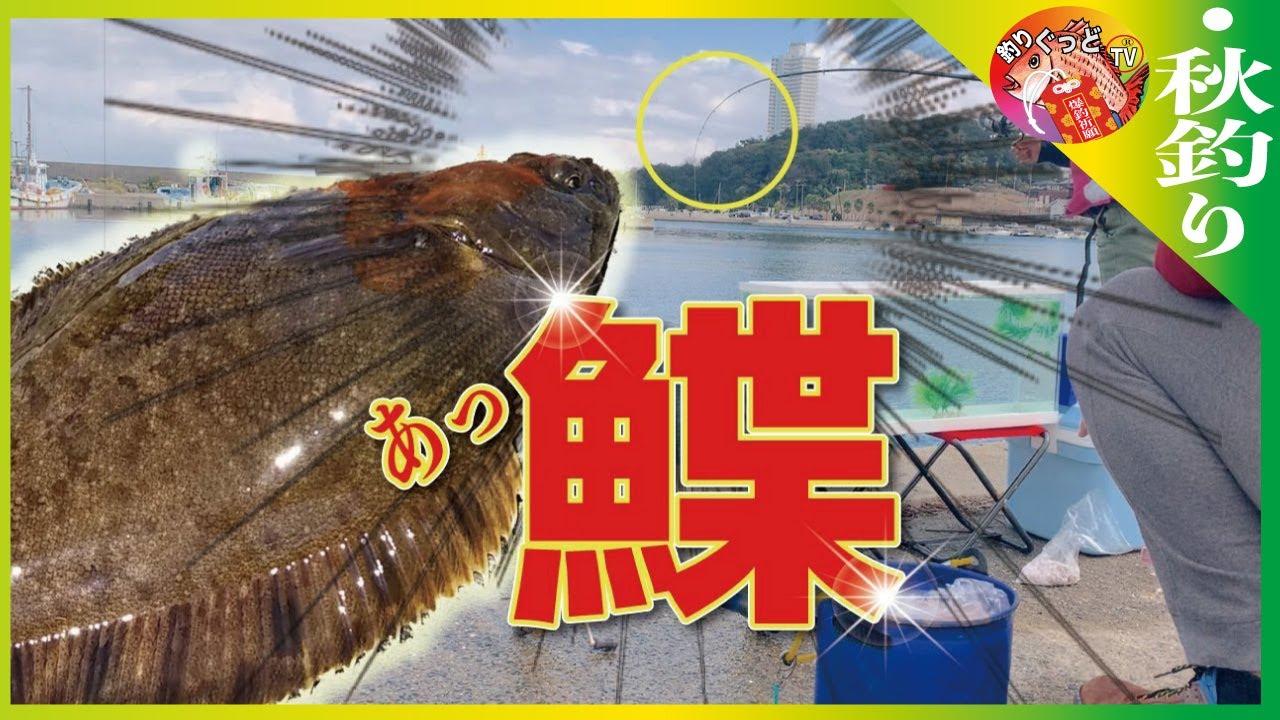 イワシ釣りに来たら【カレイ】釣れちゃった。※南知多【大井漁港】