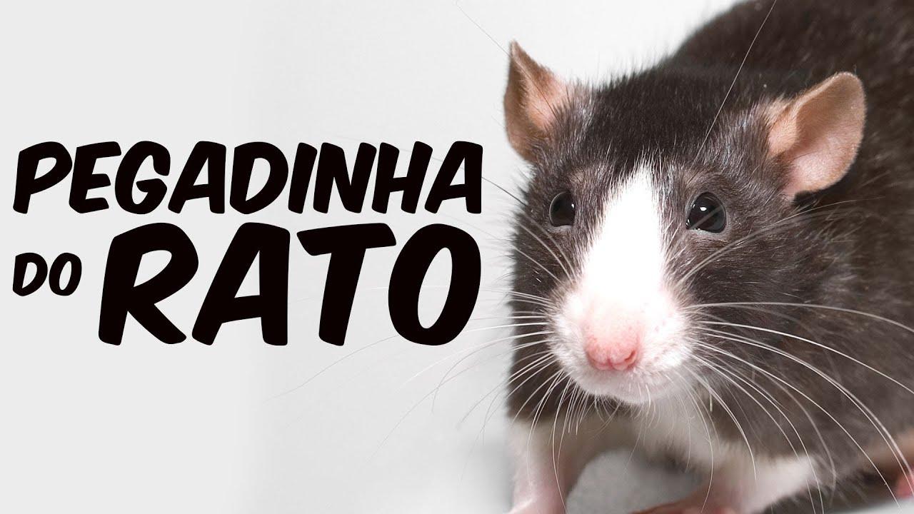 PEGADINHA do rato - YouTube