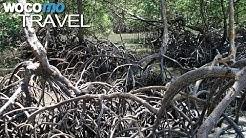 Mangroven - Bedrohte Küstenwälder in Brasilien | Gärten der Meere, Teil 2 (Dokumentation, 2008)