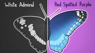 Are These Butterflies The Same?