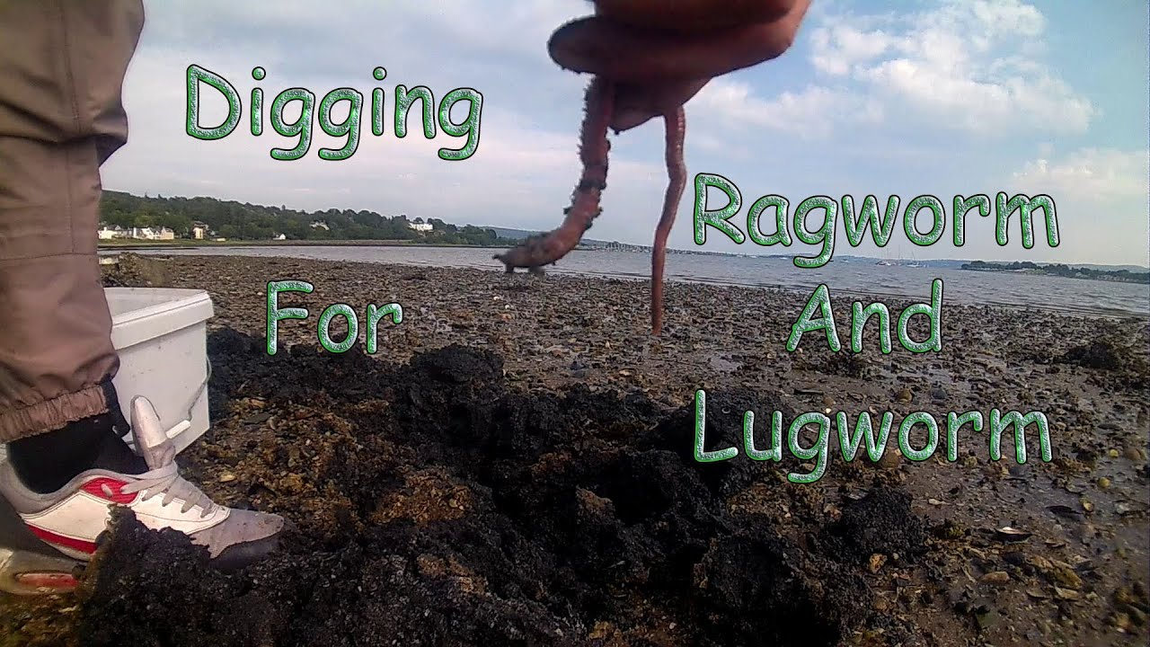 how to dig worms for fishing