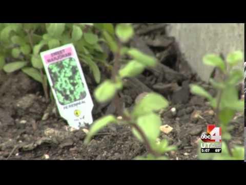 Park City elementary school kids digging new urban garden