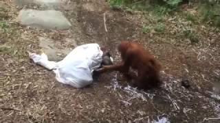В мире животных- женщина есть женщина. Зоопарк  St. Louis zoo. Ghost at the zoo