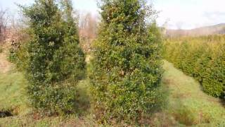 Trees And Shrubs We Used For A Mixed Boarder  For Privacy  And Comfort