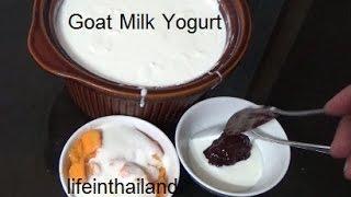 Making Goat Milk Yogurt