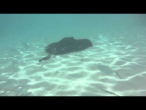 Stingray encounters at Ship Channel Cay