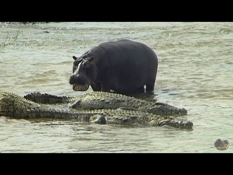 The River Of Crocodiles And Hippos