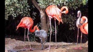 Экскурсии на Кипре:Зоопарк в Пафосе с LM HOLIDAY-www.lmholiday.com(Это видео создано в редакторе слайд-шоу YouTube: http://www.youtube.com/upload., 2016-03-01T12:17:01.000Z)