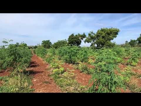 CHEAP AGRICULTURAL LAND FOR SALE - FREE ELECTRICITY- CONTACT 9443286867 OR 9600747003 BROKERS EXCUSE