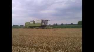 Żniwa 2012 pszenica ozima. Fortschritt MDW E 524.
