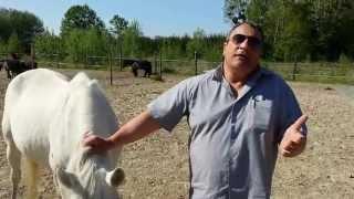 ESAO - Ostéopathie équine -  interview de Pascal Guibert directeur d'un centre équestre