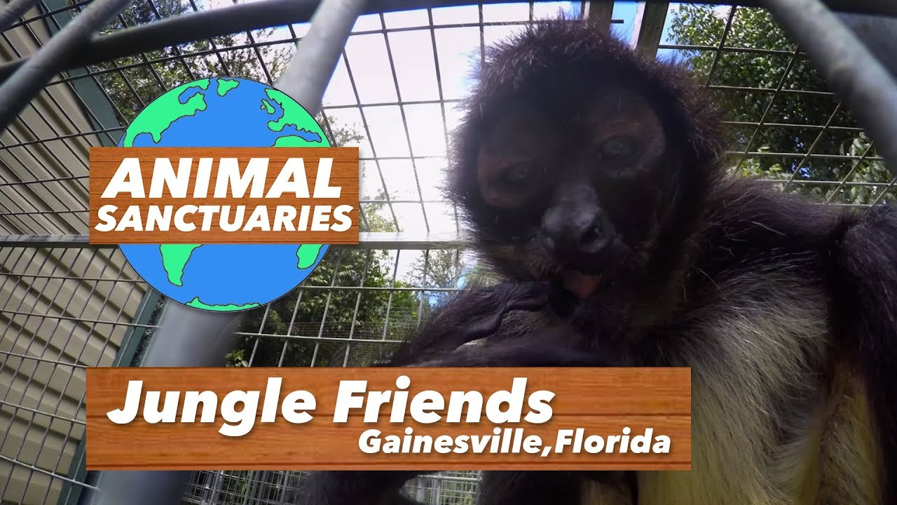 Jungle Friends - Animal Sanctuaries [Ep.1]