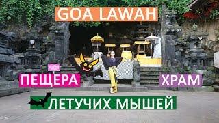 Храм і печера ''Goa Lawah'' (печера летючих мишей), Паданг-Бай | Рух - Життя №5