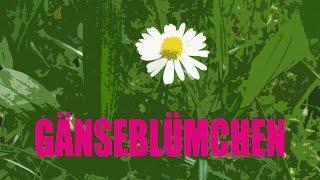 J.B.O. - Gänseblümchen (official video)