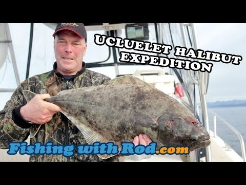 UCLUELET HALIBUT EXPEDITION - CATCHING LIVE FISH FOR THE AQUARIUM! | Fishing With Rod