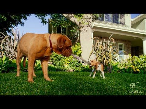 dogswell-new-chicken-jerky---treat-it-to-believe-it