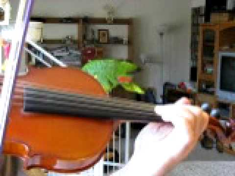 Practice the Roll ornament on Irish fiddle
