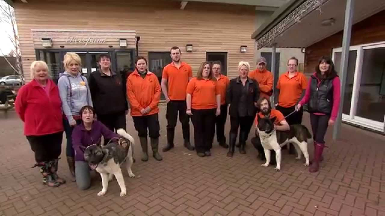 Manchester Cheshire Dogs Home Manchester
