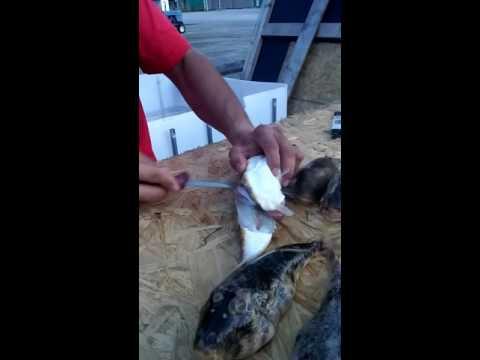 How To Clean North Atlantic Puffer Blowfish