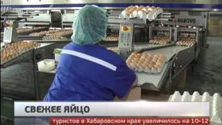 Свежее яйцо. Новости. GuberniaTV