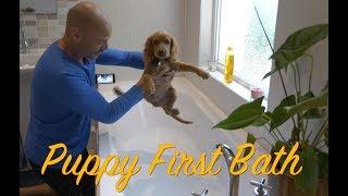 Puppy First Bath  -  Scoobie-Dee #04