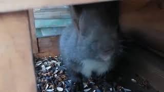 Белочка поселилась в кормушке для птиц в Ангарске