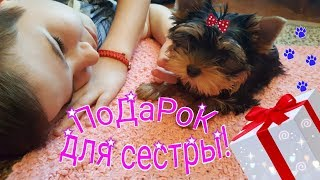 Подарок для старшей сестры! ЩЕНОК ЙОРКШИРСКОГО ТЕРЬЕРА Yorkshire Terrier Puppy