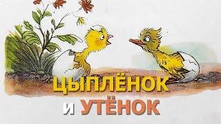 Цыплёнок и утёнок