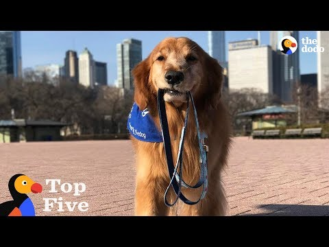 Smart Dog Walks Himself & More | The Dodo Top 5