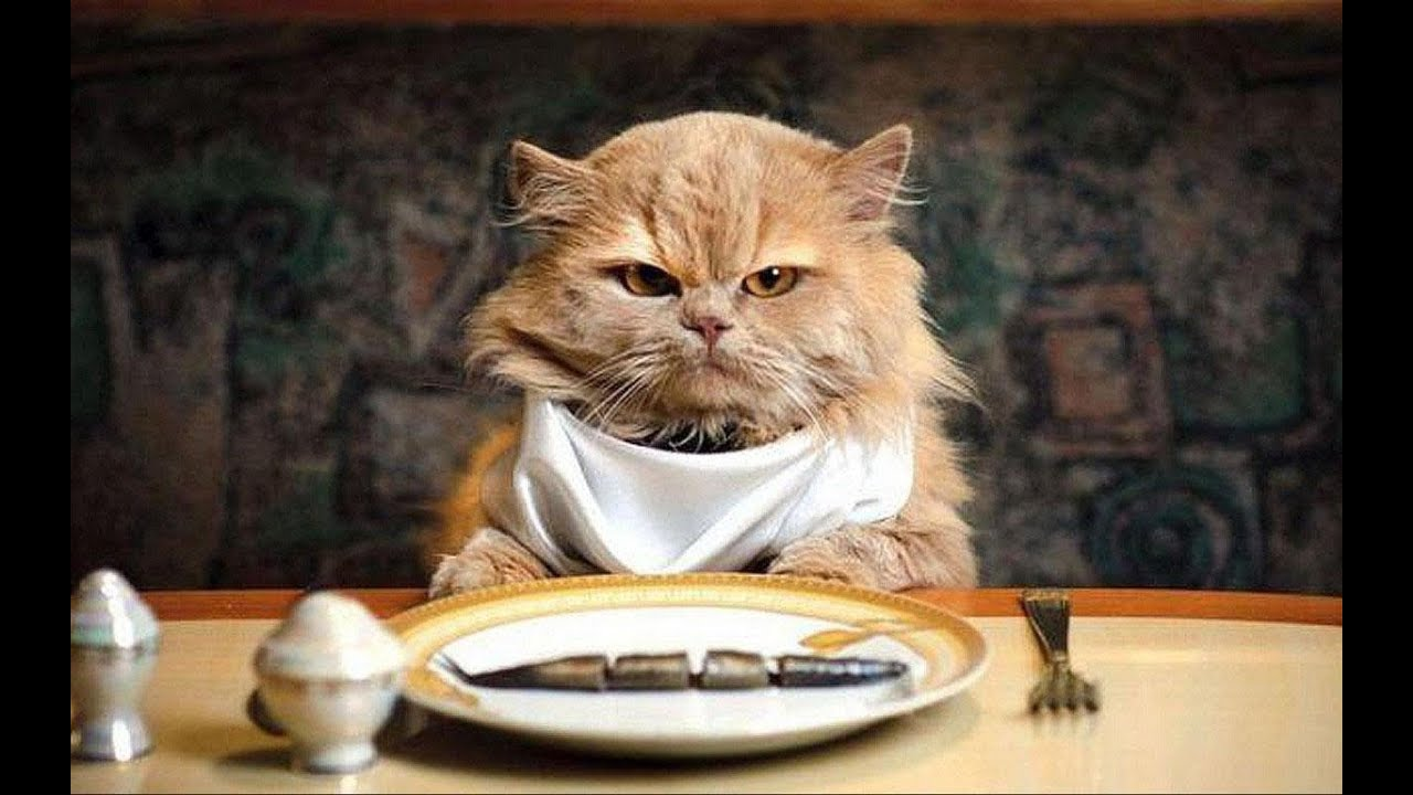 Funny Animals And Cute Pets  / around the world