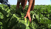 Скидки на семена овощей, цветов, декоративных растений!. Скидка на удобрение и препараты!. Скидки до 25% на средства защиты растений,