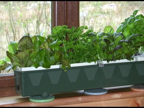 How To Hydroponic Herb Gardening Youtube
